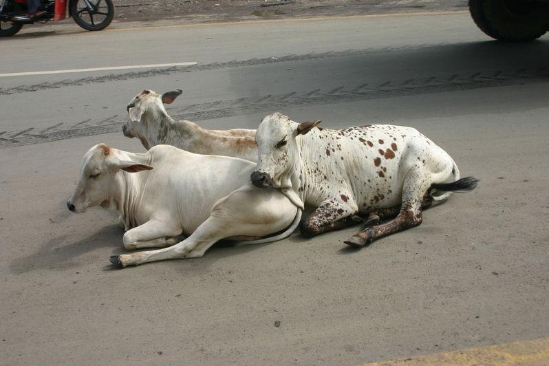 Zwillingsratgeber img_0777 Indienurlaub Sommer 2010