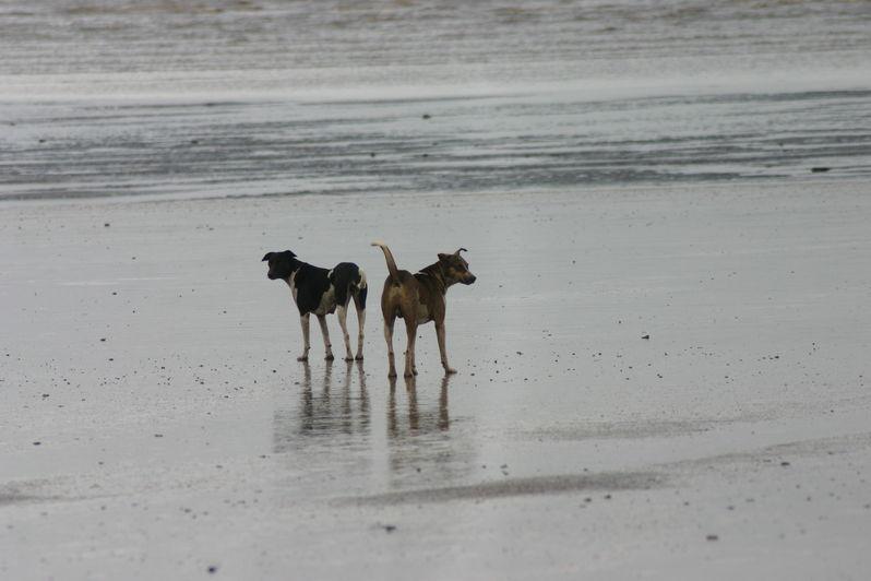 Zwillingsratgeber img_0805 Indienurlaub Sommer 2010